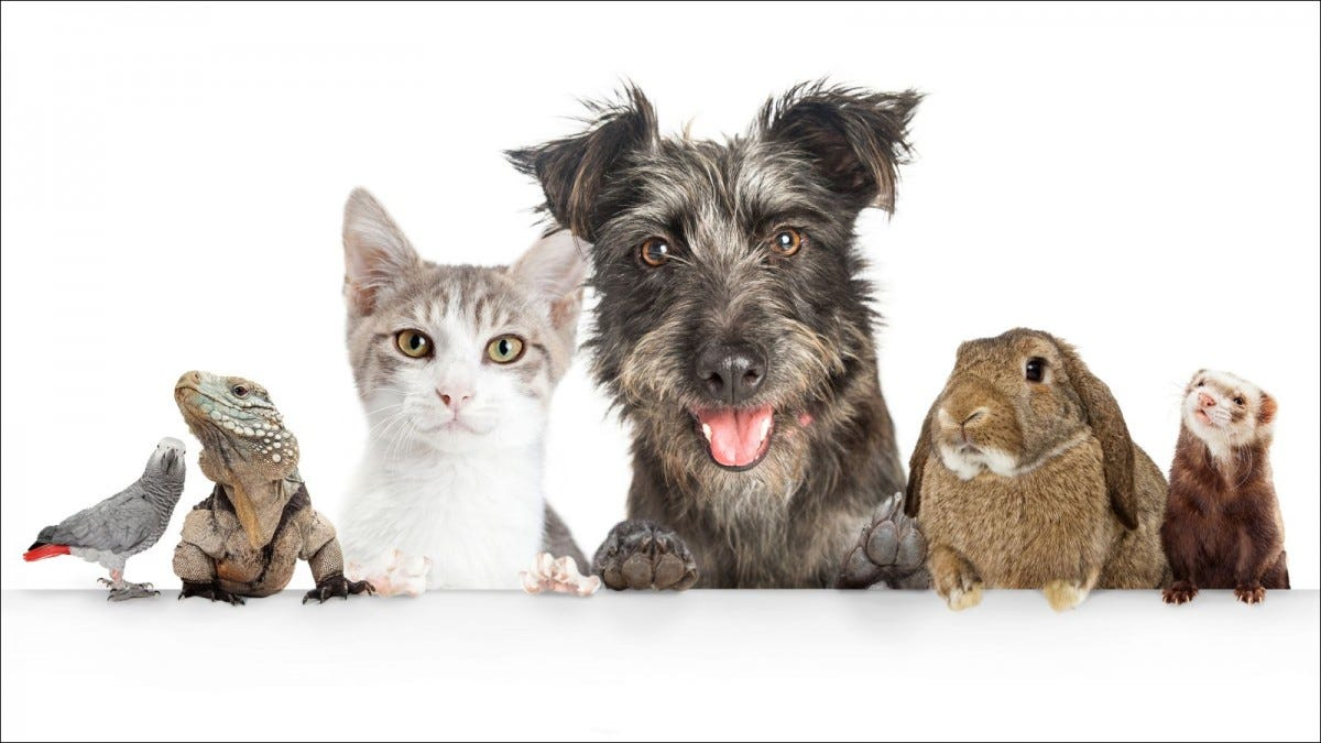 Common cute domestic animal pets against white background