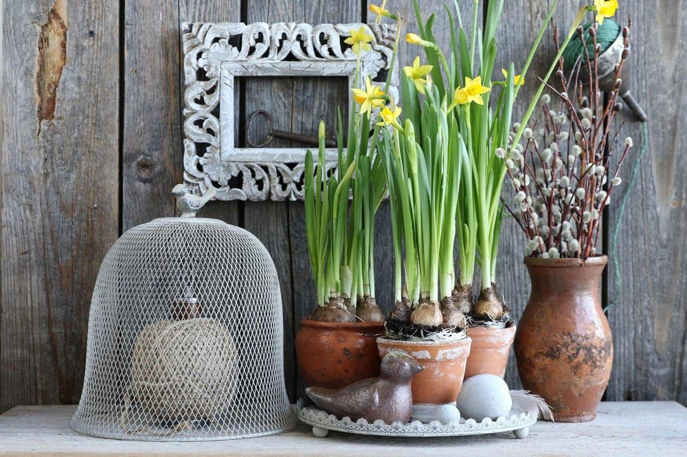 A rustic decorative vignette, including spring flowers, a wire mesh cloche, and other decorations.