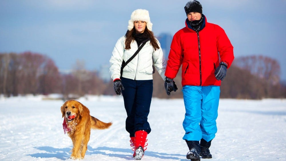 A man, woman, and Golden Retriever walking in the snow.