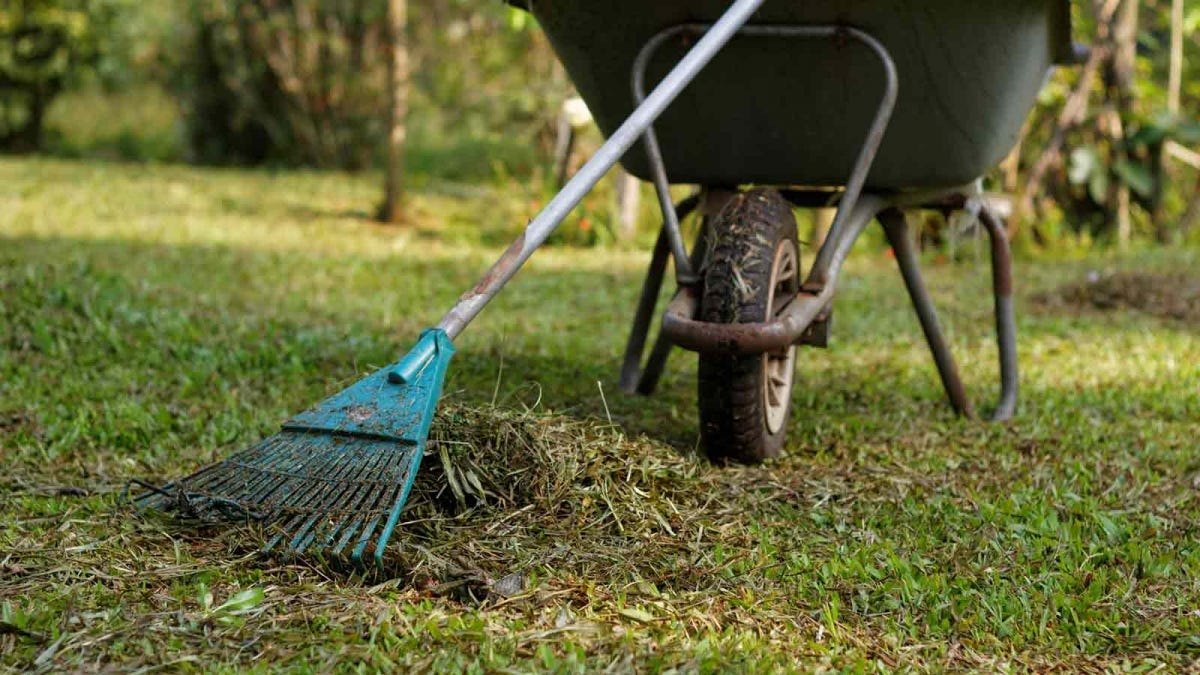 a rake, pile of grass clippings, and a wheel barrow
