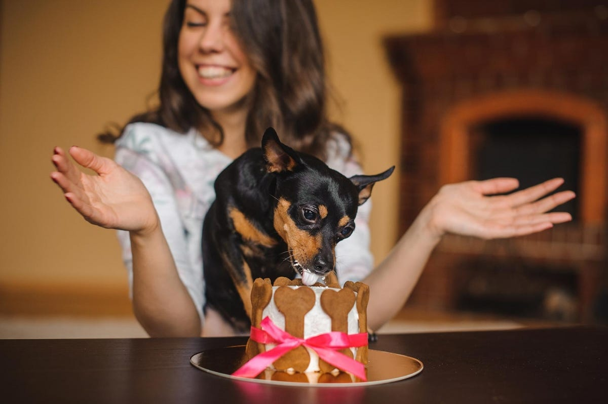 Dog eating a dog-friendly birthday cake.