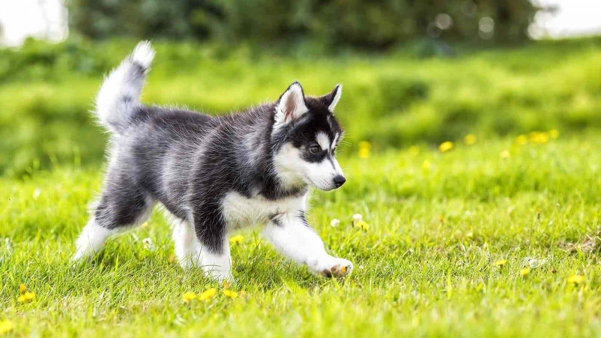puppy strolling in a meadow