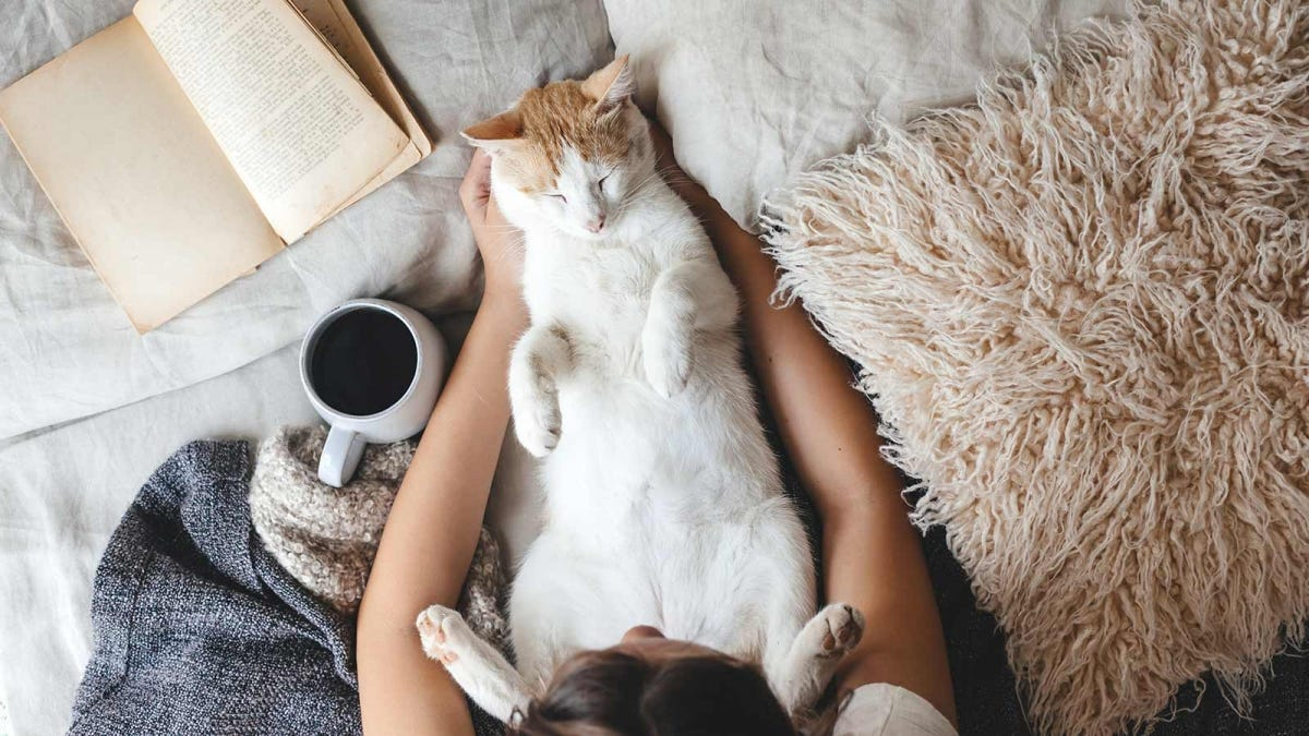 Woman sitting on her bed with a cup of coffee, a book, and a cat snuggled up.