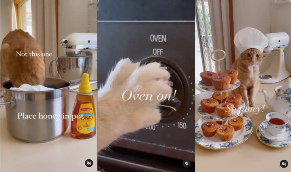 Three images of Honey Belle the cat baking.