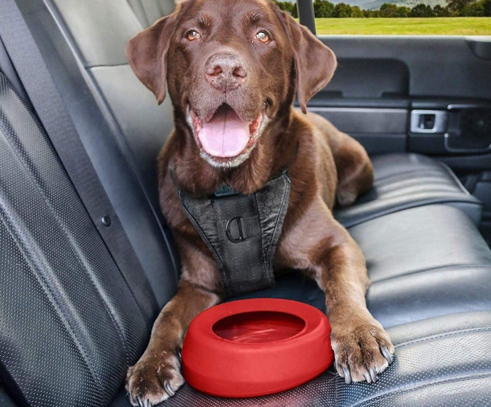 A brown lab in a back seat with the No-Spill Water Dish.