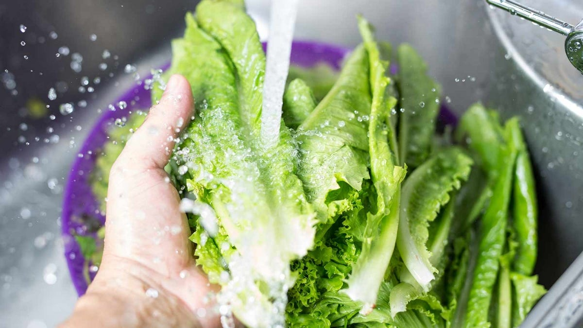 Roman lettuce being washed in a restaurant sink.