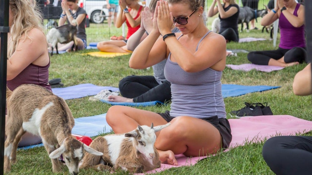 A group of women doing yoga outside surrounded by young goats.