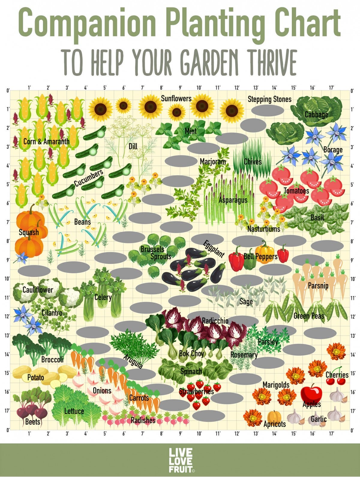 A companion planting chart showcasing how to plant compatible plants together.