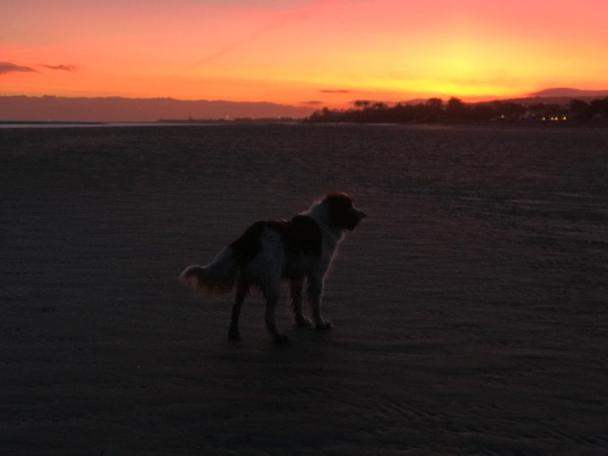 dog sunrise