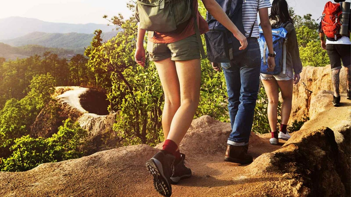 friends hiking in a scenic forest