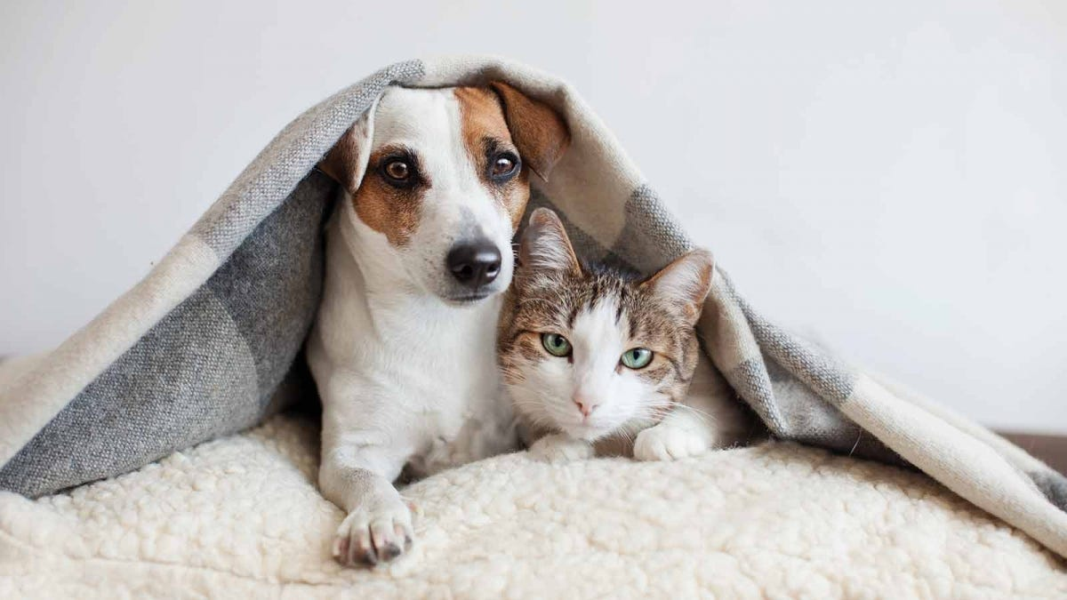 Dog and cat snuggled up on a couch under a blanket