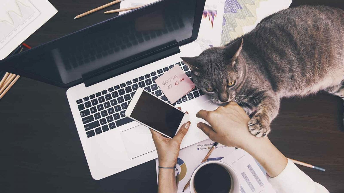 Woman's hand holding her phone over a laptop, and a cat lying on the desk pawing her other hand.