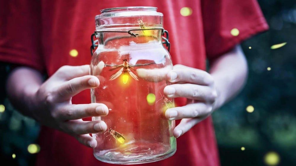 A boy holding a jar of fireflies.