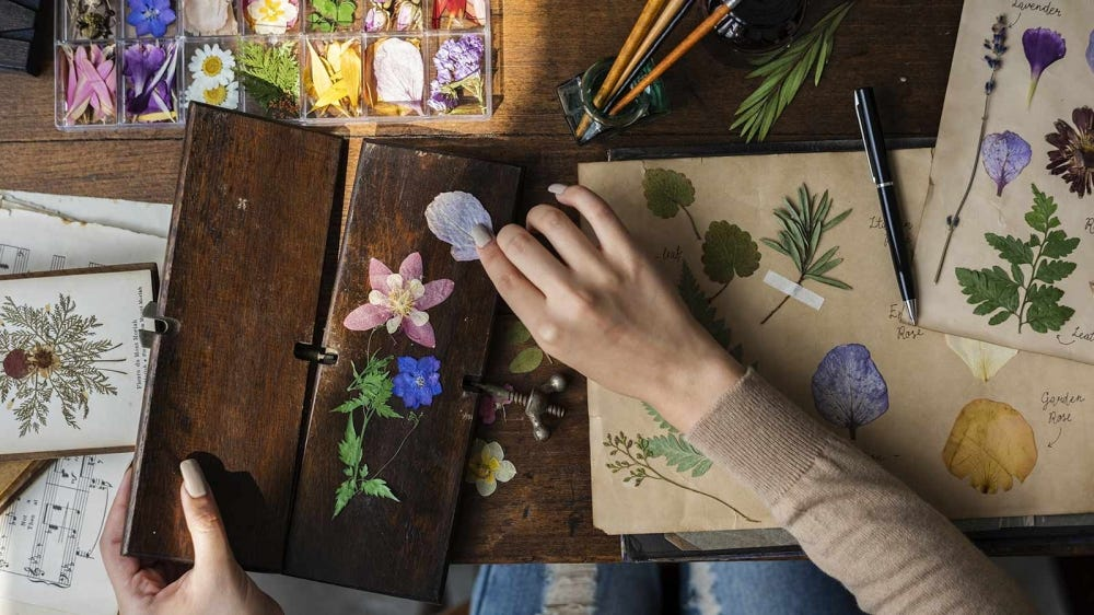 Woman sitting at a desk, working on a collection of pressed flowers.