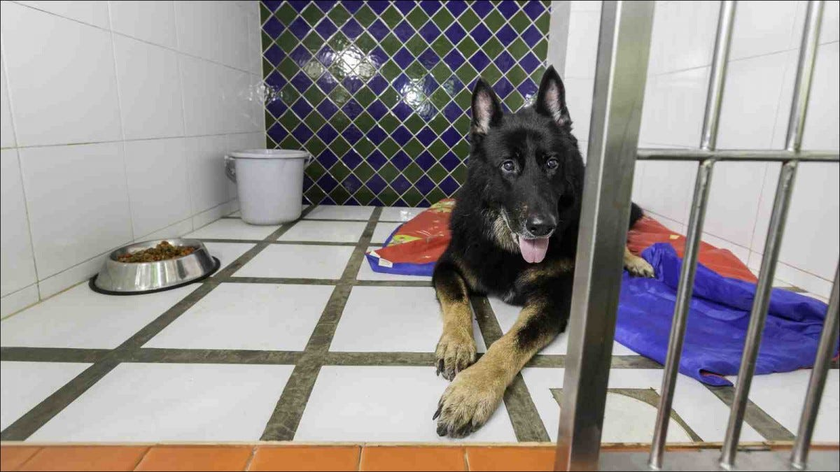 German shepherd dog in pet hotel