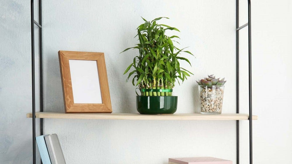 A lucky bamboo plant on a wooden shelf, along with other decorations.