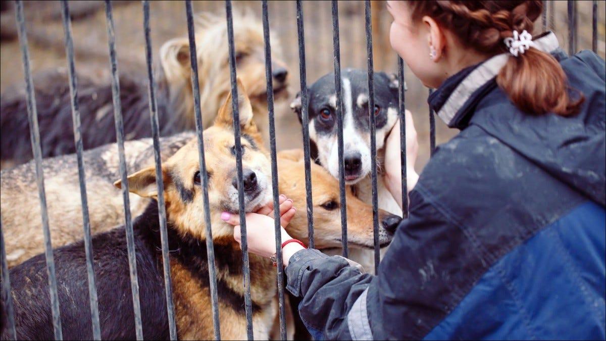 Молодая девушка смотрит на собак в приюте