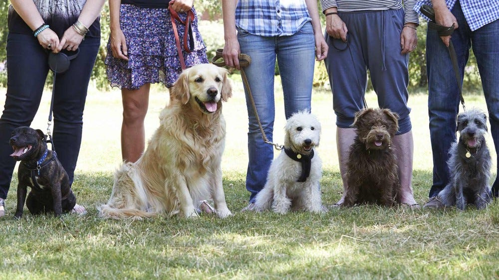 A line of people standing behind their dogs at a training class.