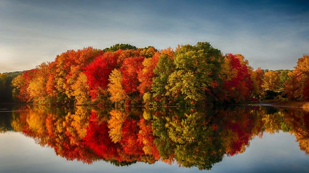 Beautiful fall foliage, reflected in the still water of a pond.