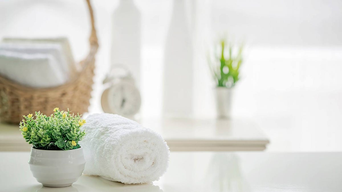 A potted plant sitting next to a rolled-up white towel.