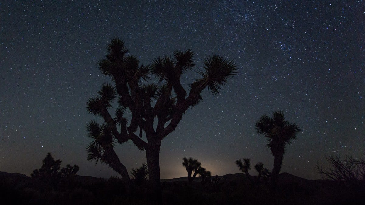 A starry night against a foreground of desert palm trees.