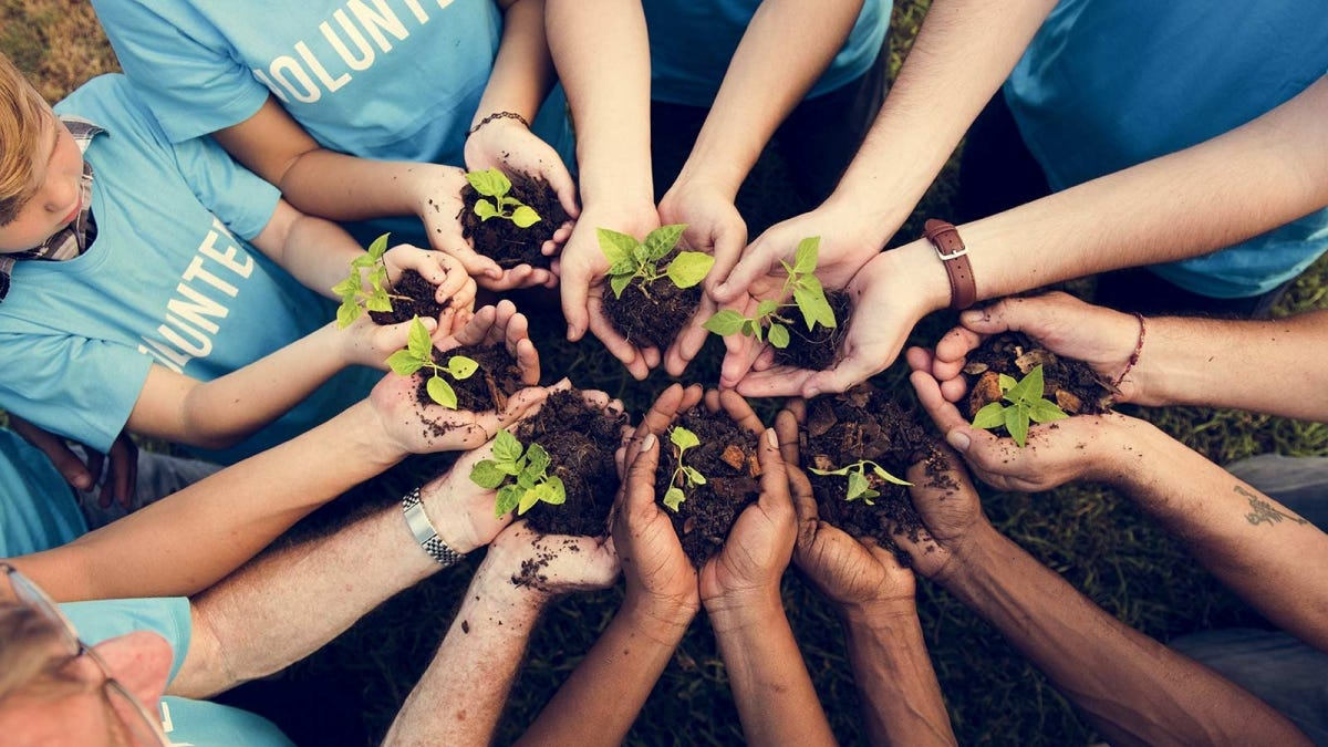 A group of volunteers holding seedlings.
