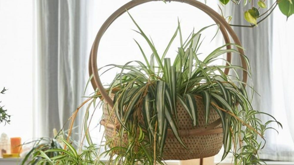 Urban Outfitters Margo Hanging Planter