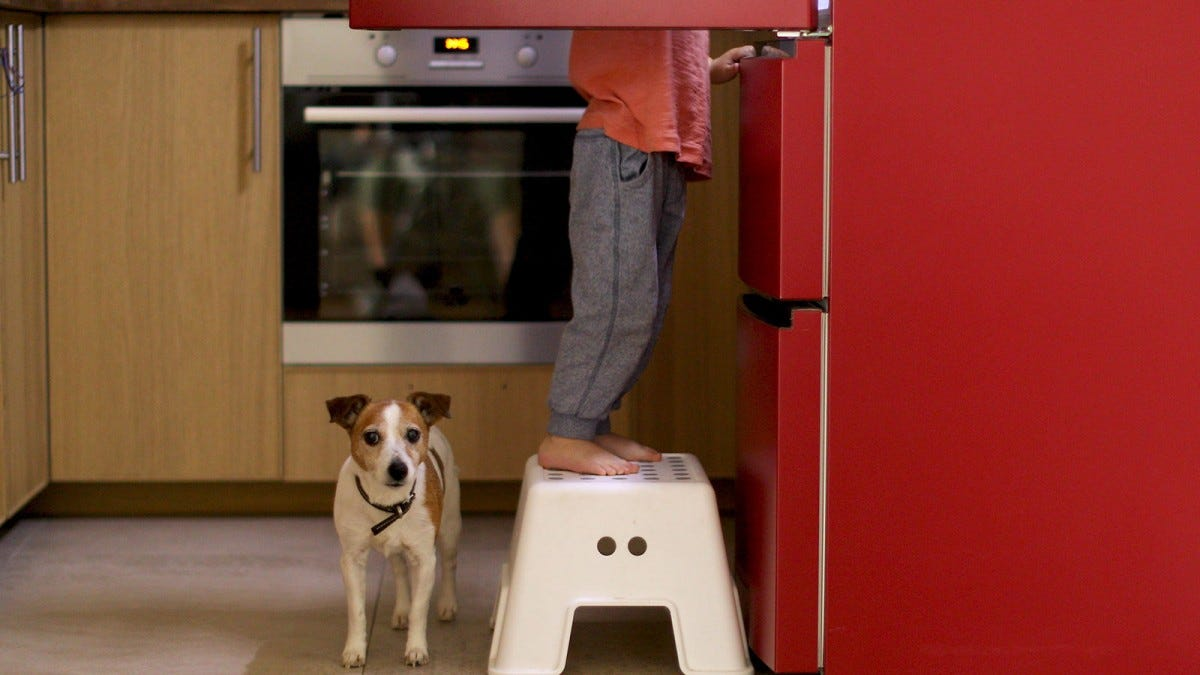 A child's feet and legs on a step stool in front of a fridge next to a little dog.