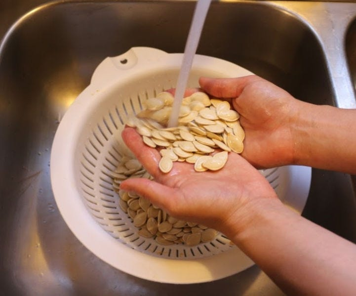 Washing pumpkin seeds under cool running water.