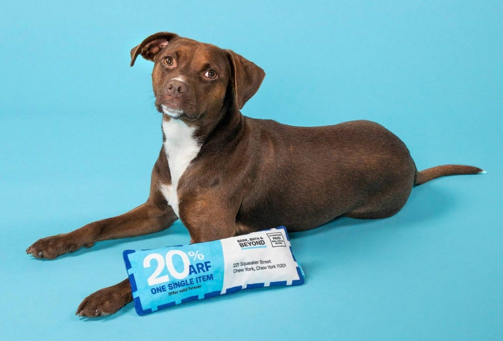 A brown dog lying next to the Bed, Bath, & Beyond coupon chew toy by BARK.