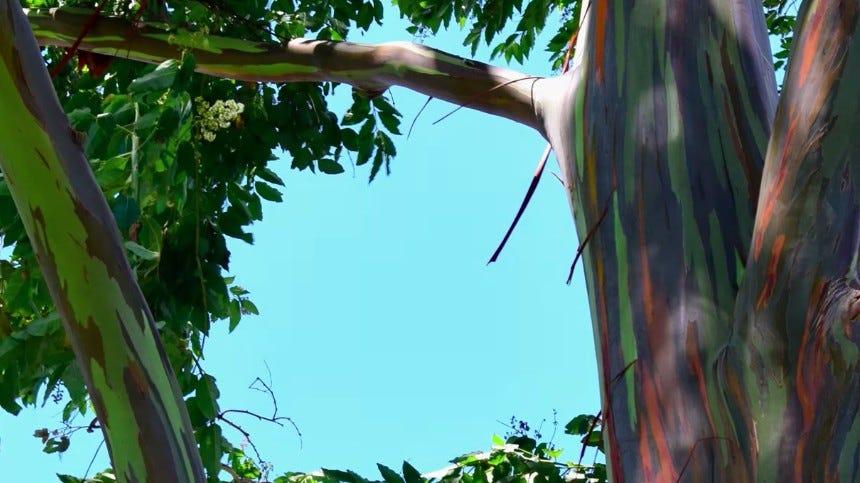 rainbow tree against blue skies