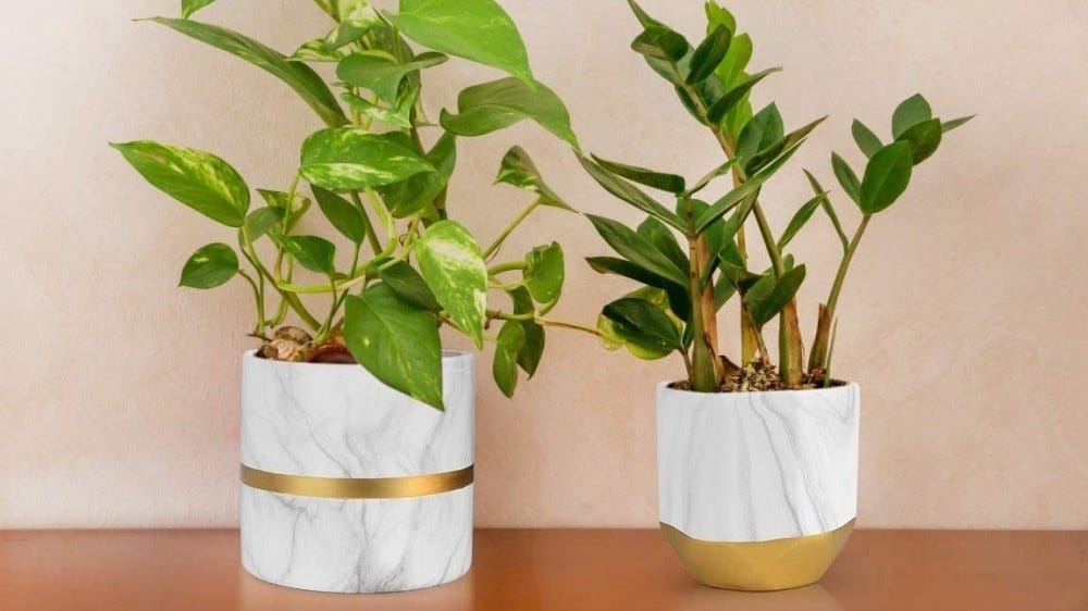 Two houseplants in white marble and gold planters.