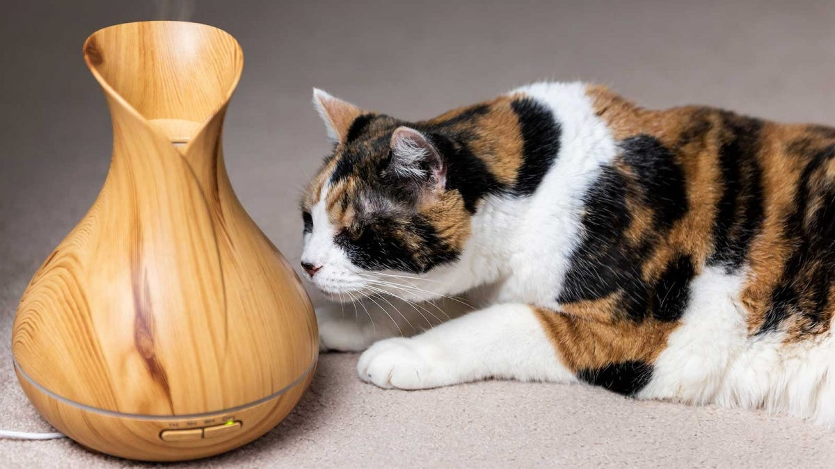 A cat sniffing an aromatherapy diffuser.