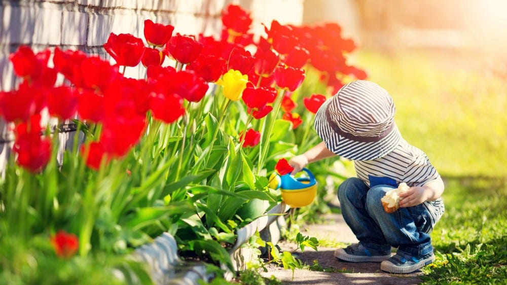 A child watering a flower garden.