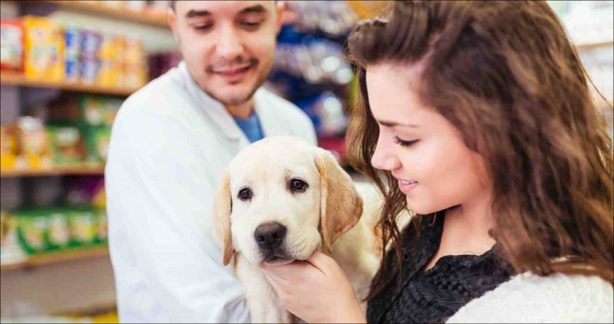 Young woman with her labrador retriever puppy at pet shop