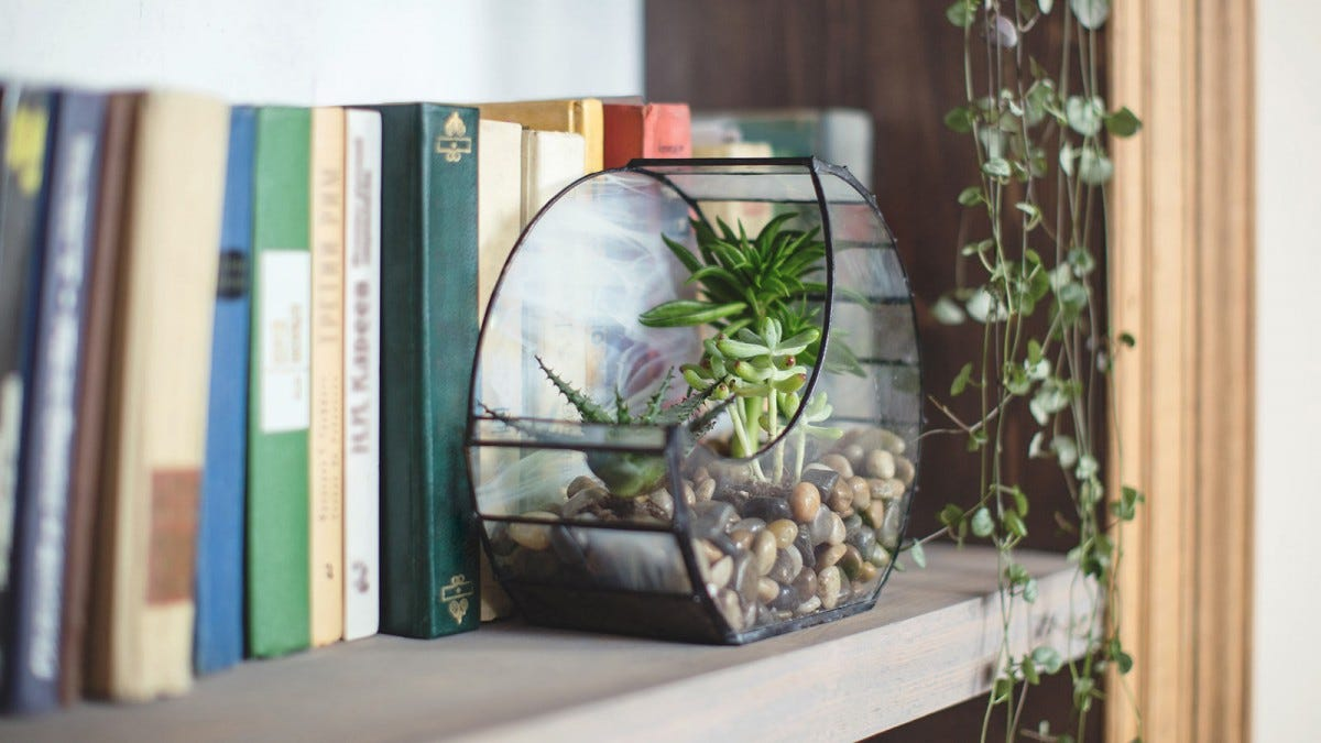 A small terrarium on a bookshelf with succulents.