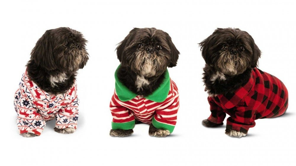 Three shih tzus wearing ALDI dog pajamas.