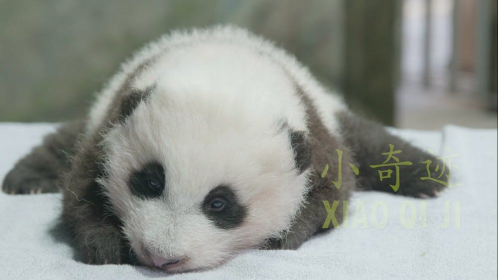 The Smithsonian National Zoo's baby panda has a name.
