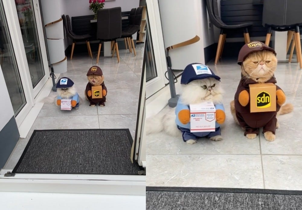 Two cats dressed as a postal worker and UPS driver sit in front of a doorway.