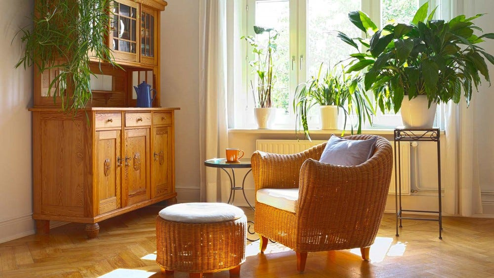 A sunny living room with plants on shelves, window sills, and stands.