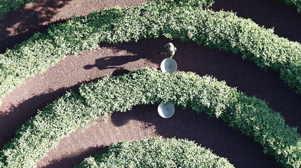 A collection of hedges form a maze in a new idea for public parks.
