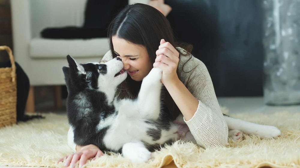 A woman playfully wrestling with her husky puppy.