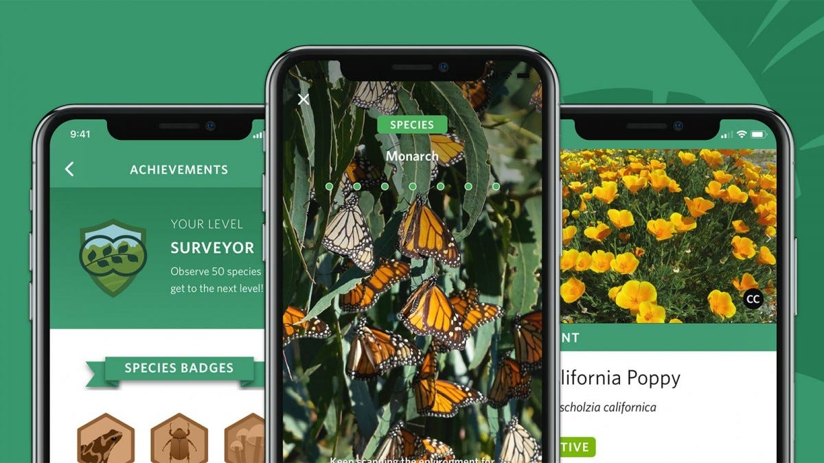 The Seek app on a phone identifying Monarch butterflies.