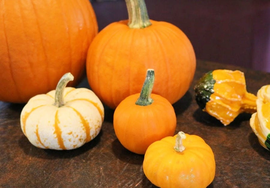 A variety of different sized pumpkins